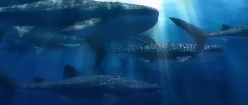 动画电影《海兽之子》宣布内地定档11月20日