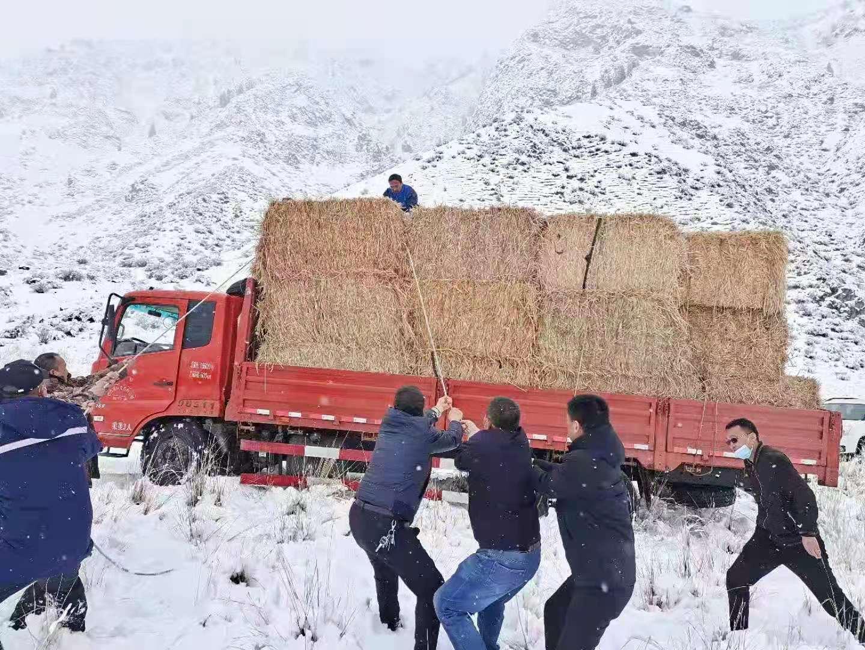 新疆和硕县深夜抗击暴雨雪灾害 地缓解天气灾害对牧民带来的影响