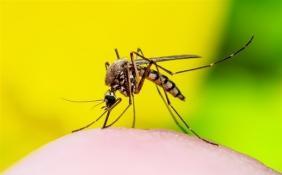 以蚊治蚊!广东蚊子工厂日产500万只科技蚊用于灭蚊