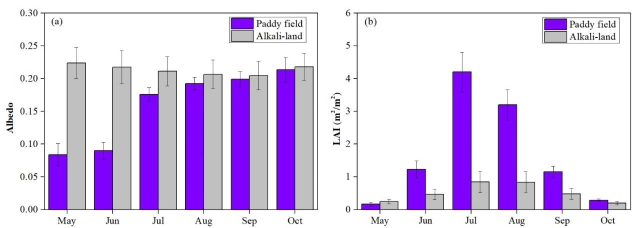 鹽堿地改良種稻改變地表生物地球物理特征 有助于調節局地氣候